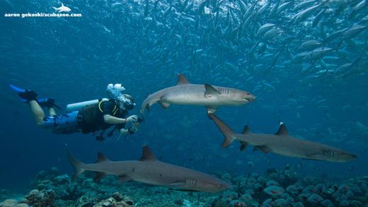壁纸 海底 海底世界 海洋馆 水族馆 桌面 520_293