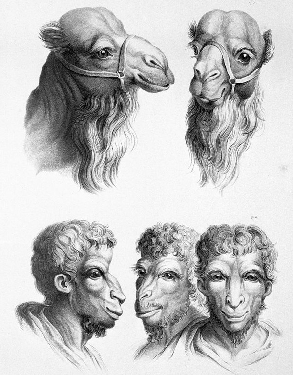 关于进化的17种疯狂猜想 ?! - 秋雨劲风 - 秋雨劲风的博客