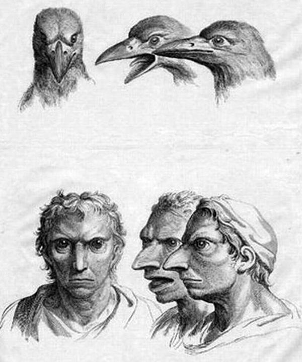 如果人类的祖先是鹦鹉和兔子,关于进化的17种疯狂猜想 ?!。 - 驯马汉子 - yyjgr的博客