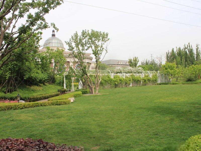 老客户 远洋天著二期,联排别墅,一套 带花园送地下 随时看房