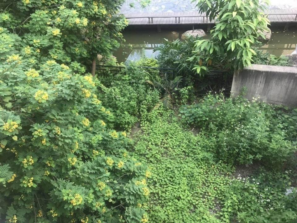 万科红郡 半山腰别墅439方 下沉式花园200方 全明地下室